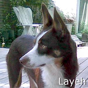 Layeh_TN.jpg
