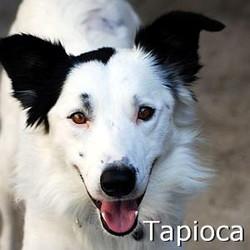 Tapioca_TN.jpg