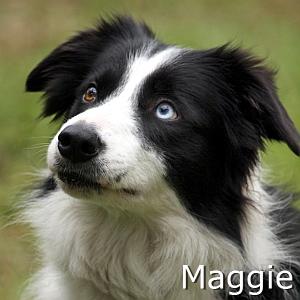 Maggie_TN.jpg