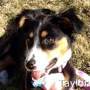 Taylor_TN_New.jpg