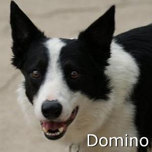 Domino_TN.jpg