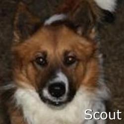 Scout_TN.jpg
