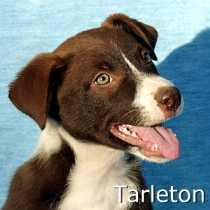 Tarleton_TN.jpg