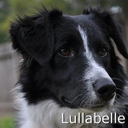 Lullabelle_TN.jpg