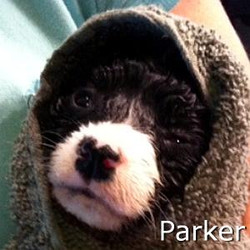 Parker_TN.jpg
