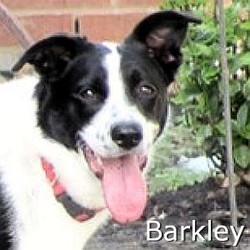 Barkley_TN_New.jpg