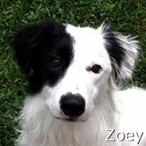 Zoey_TN.jpg