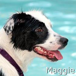 Maggie2_TN.jpg