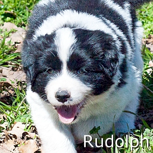 Rudolph_TN.jpg