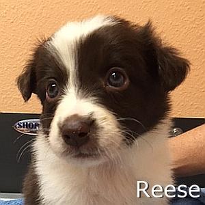 Reese-TN.jpg