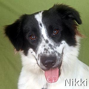 Nikki_TN_New.jpg
