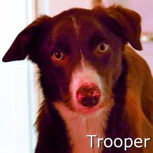 Trooper_TN.jpg