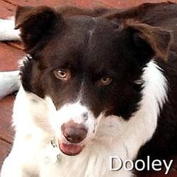 Dooley_TN.jpg