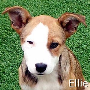Ellie_TN2.jpg