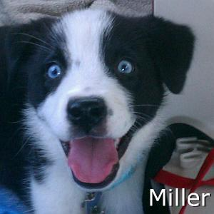 Miller_TN.jpg