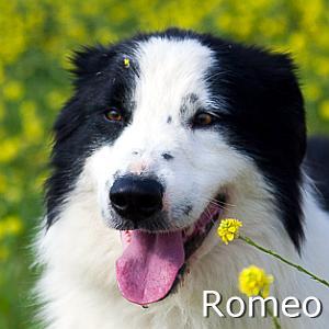 Romeo_TN.jpg