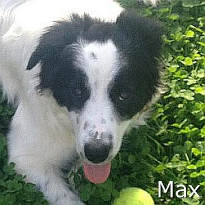 Max2_TN.jpg