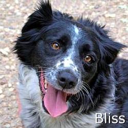 Bliss_TN.jpg