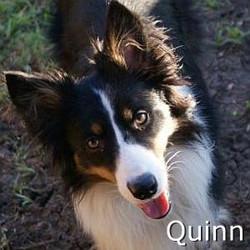 Quinn_TN.jpg