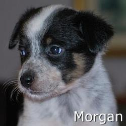 Morgan_TN.jpg