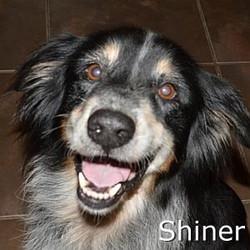 Shiner_TN.jpg