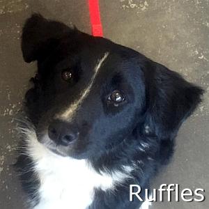 Ruffles_TN.jpg