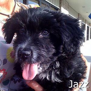 Jazz_TN.jpg