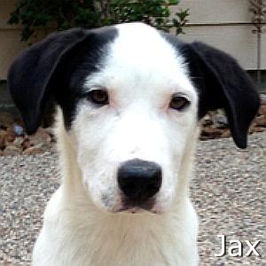 Jax_TN_New.jpg