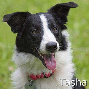 Tasha_TN.jpg