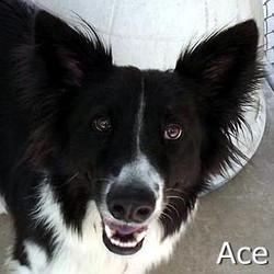 Ace_TN.jpg