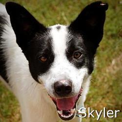 Skyler_TN.jpg