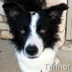 Tanner_TN.jpg