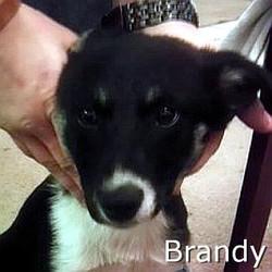 Brandy_TN.jpg