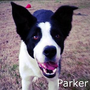 Parker_TN_2013.jpg