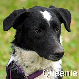 Queenie_TN.jpg