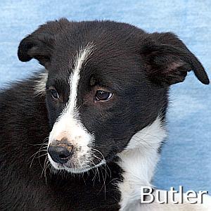 Butler_TN.jpg