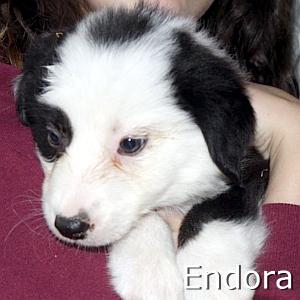 Endora_TN.jpg