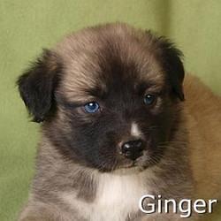Ginger_TN.jpg