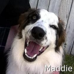 Maddie_TN.jpg