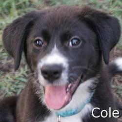 Cole_TN.jpg