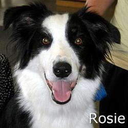 Rosie_TN.jpg