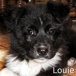 Louie_TN.jpg