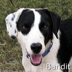 Bandit_TN.jpg