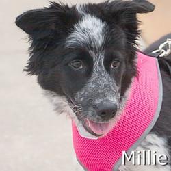 Millie_TN.jpg