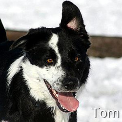 Tom_TN.jpg