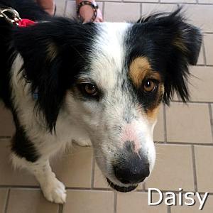 Daisy_TN.jpg