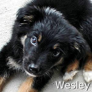 Wesley_TN.jpg