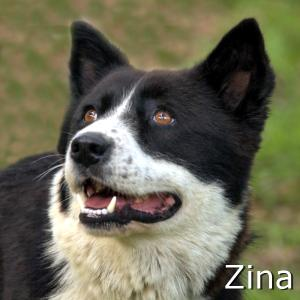 Zina_TN.jpg