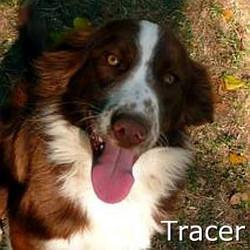 Tracer_TN.jpg