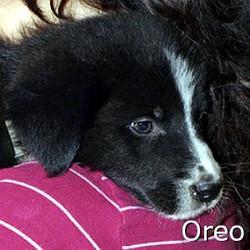 Oreo_TN.jpg